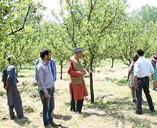 Learning from Apple Growers in Ratnipora, District Pampore, J & K, May 2014